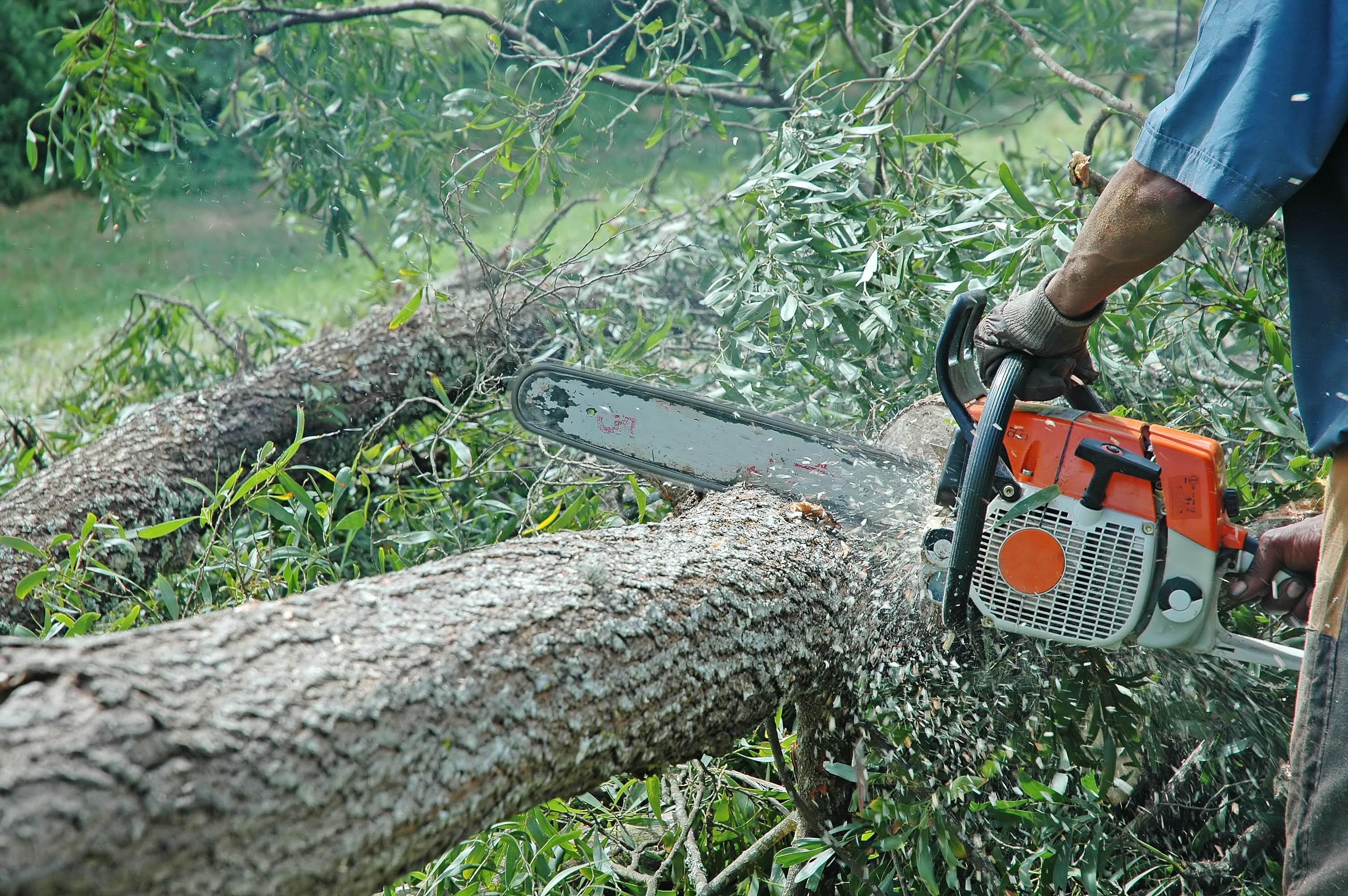 Queda de árvore mata trabalhador rural em Barão de Cocais