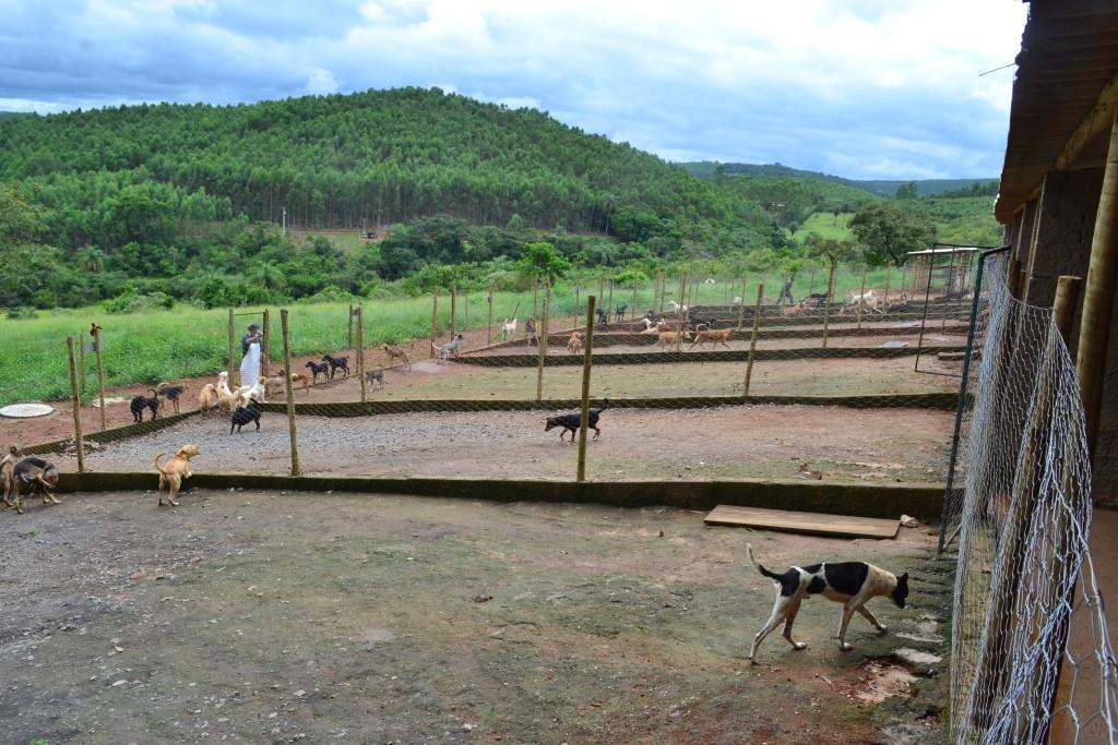 Canil de Barão de Cocais já tem mais de 100 animais resgatados
