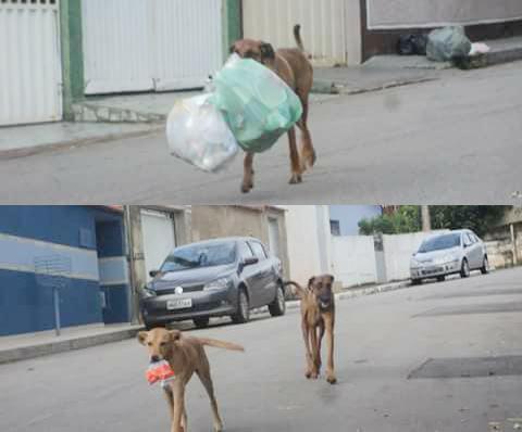 'Garicão': cachorros recolhendo lixo em Itabira chamam atenção na Internet