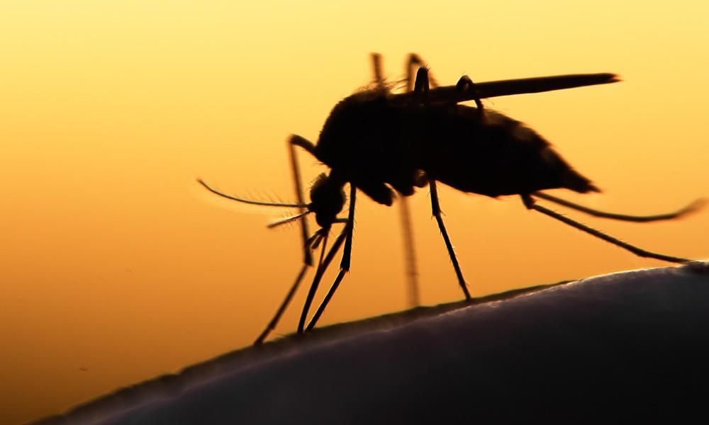 Febre amarela matou ao menos cinco itabiranos em menos de 30 dias