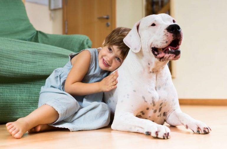 Animais de estimação: confira estas dicas antes de mudar de imóvel