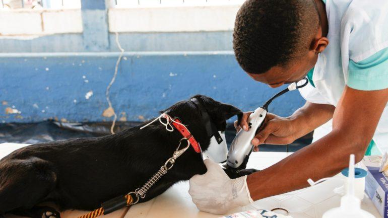 50 cachorros de rua são castrados pela Prefeitura de Itabira