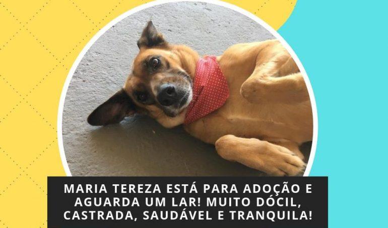 Cãopanhia do Bem realiza feira de adoção de animais neste domingo em Monlevade