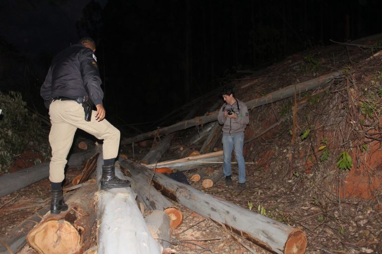 Operador de motosserra é encontrado morto em plantação de eucaliptos