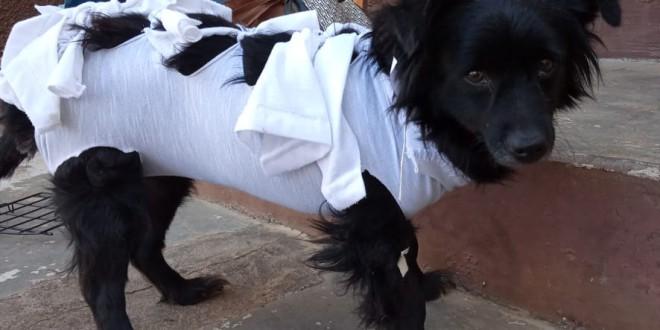Itabira abre cadastro para castrar cães e gatos no final desta semana
