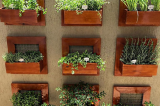Jardim vertical em casa: 5 dicas para quem quer um espaço verde
