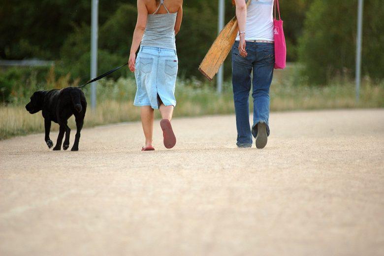 7 erros na hora do passeio com o cachorro de estimação