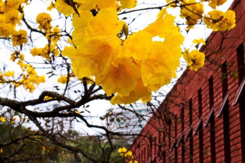 Hashtag #meuipedefato brinda a chegada da Primavera – Veja galeria atualizada