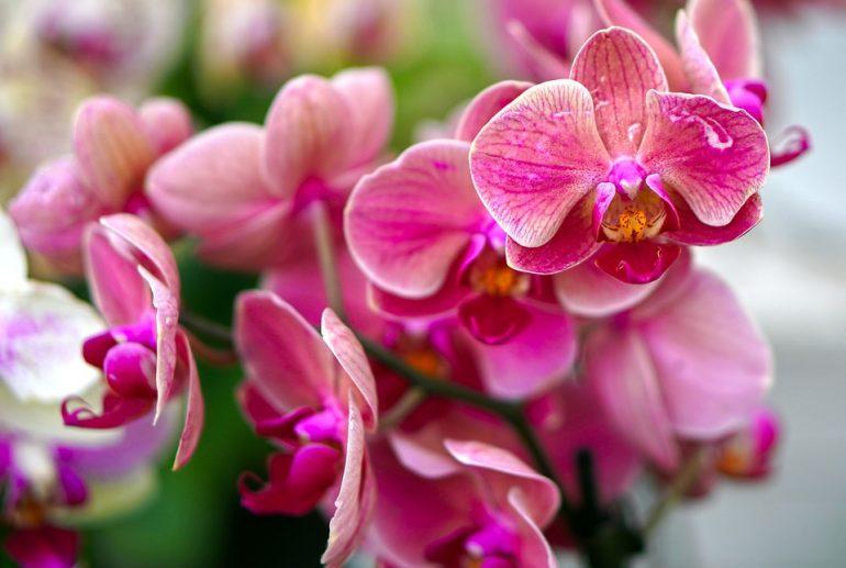Associação realiza exposição de orquídeas neste final de semana em Itabira