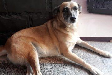 Família procura por cadela que desapareceu após se assustar com foguetes