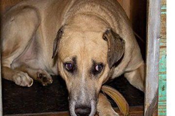 Que tal adotar um pet? Cachorros precisam de novo lar em Itabira