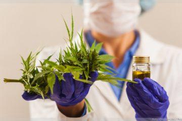 Belo Horizonte terá laboratório especializado em produtos de Cannabis