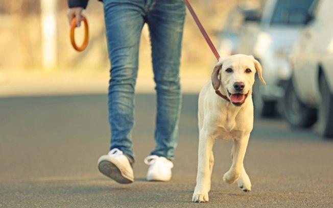 Posse responsável do animal é um compromisso com a vida
