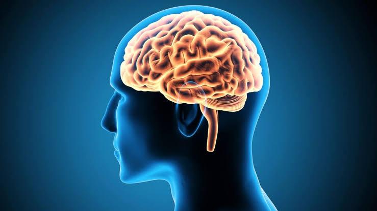 Exercícios para o cérebro melhoram desempenho profissional