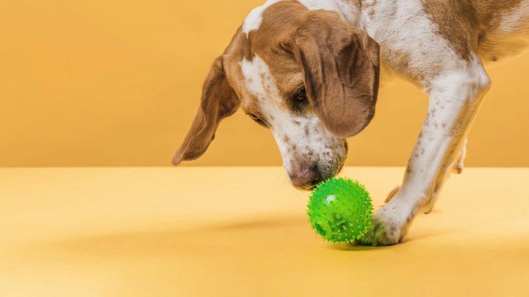 Pets na quarentena: saiba como mantê-los ativos e saudáveis cumprindo as regras