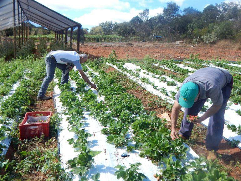 Prefeitura de Conceição do Mato Dentro realiza palestra sobre direito trabalhista para produtores rurais