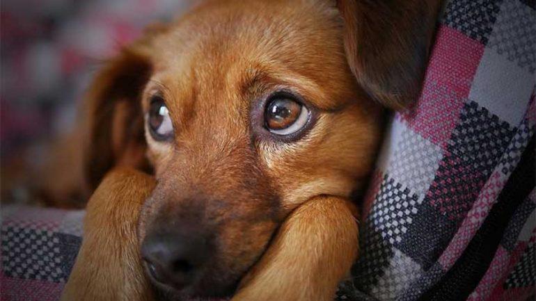 Vermes em cães e gatos: o que eu devo saber?