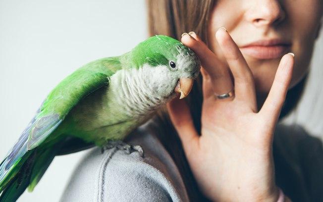 Como e quais as condições para legalizar um animal silvestre?