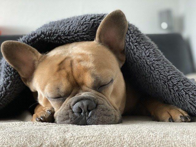 Como proteger os animais de estimação nesses dias mais frios