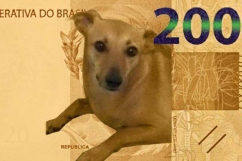 Cachorro caramelo: Banco Central descarta estampar o animal em nota de R$200