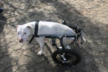MPMG oferece denúncia contra homem acusado de mutilar cão em Confins