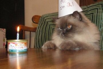 Festa de aniversário para gato infecta 15 pessoas com Covid-19