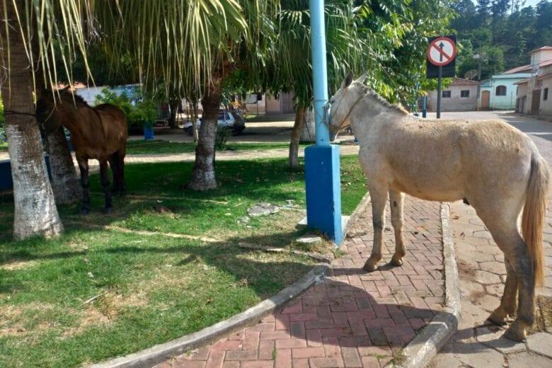 Ladrão de cavalos é preso em cidade mineira