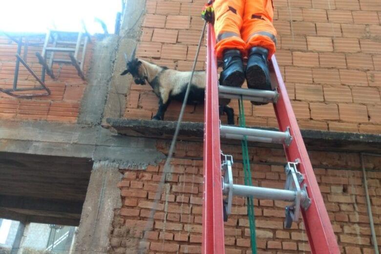 Cabrito é resgatado após ficar preso em beiral de laje