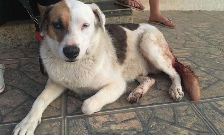 Irritado com latidos, homem tenta arrancar testículos de cachorro