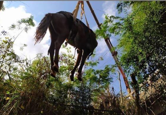 Cavalo é resgatado após cair em córrego de Conceição do Mato Dentro