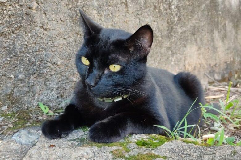 Itabirana procura gato que desapareceu no bairro Santo Antônio