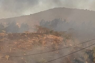 Candidópolis em chamas: incêndio em vegetação ameaça casas; veja os vídeos