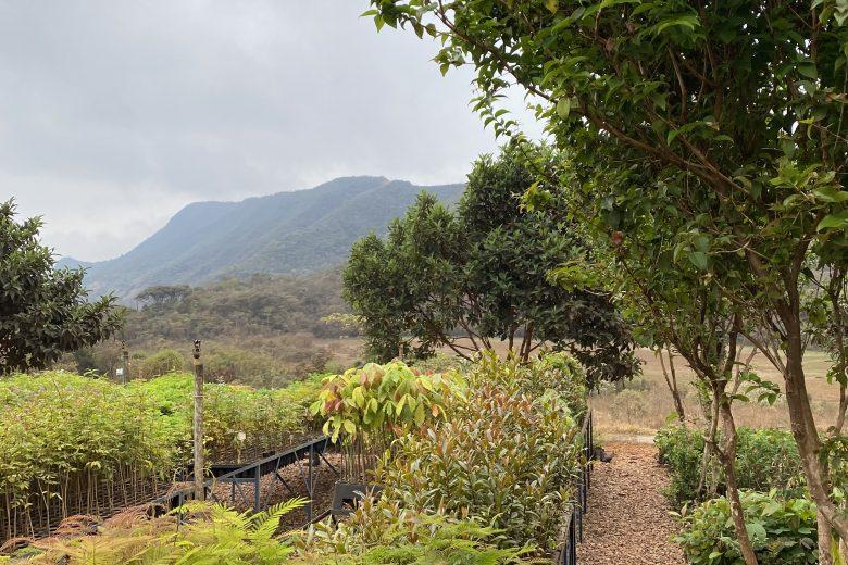 Compensação ambiental: MR Mineração planta mais de 25 mil árvores na Fazenda Gandarela
