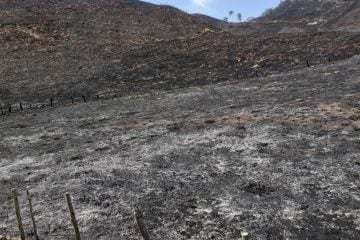 Produtor rural e funcionário são multados em mais de R$273 mil por incêndio florestal em Ferros