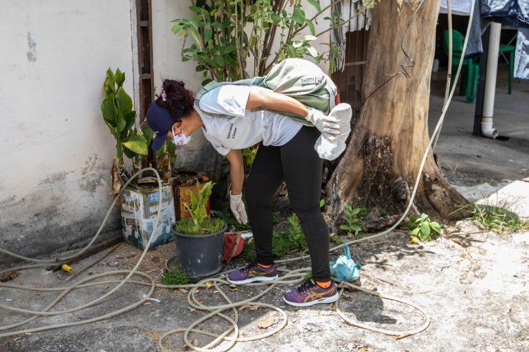 Aedes aegypti: Ipatinga realiza novo LIRAa para medir índice de infestação
