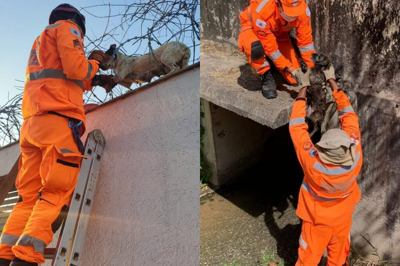 Cães em situações de risco são resgatados pelos bombeiros em BH
